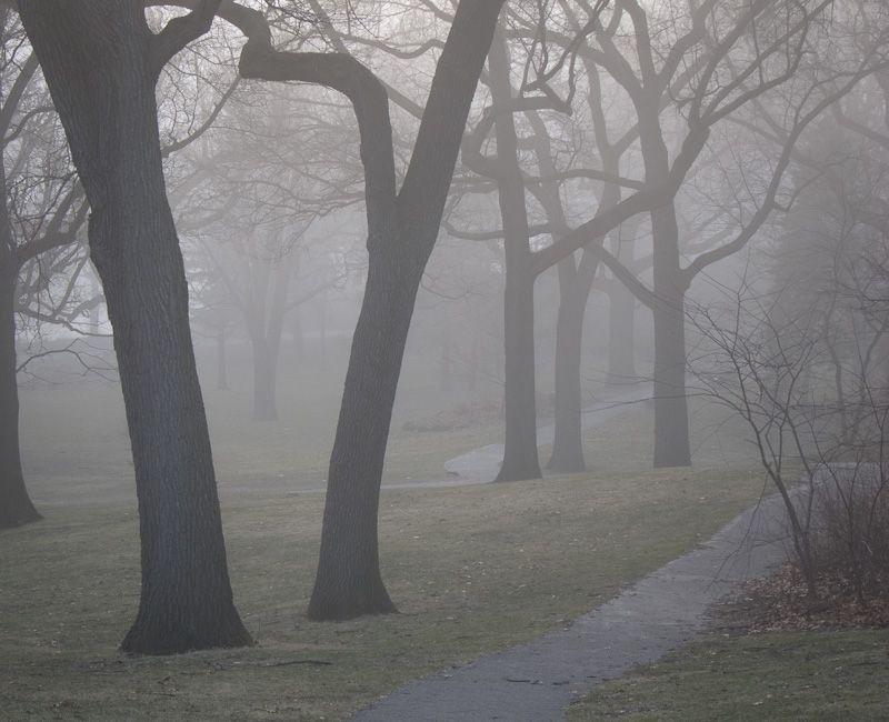 """High Park"" Toronto fog Spring trees walking"