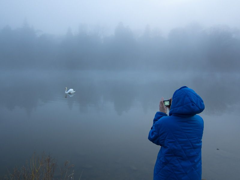 """High Park"" Toronto ""Grenadier Pond"" swan fog"