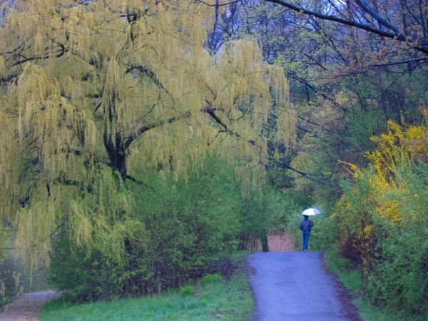 """High Park"" Toronto Spring rain willow umbrella"