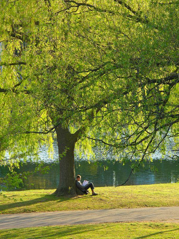 """High Park"" Toronto Spring people willow reader"