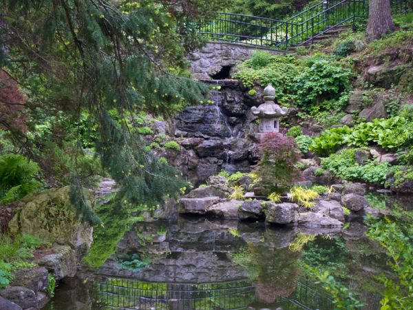 """High Park"" Toronto Spring plants reflection"