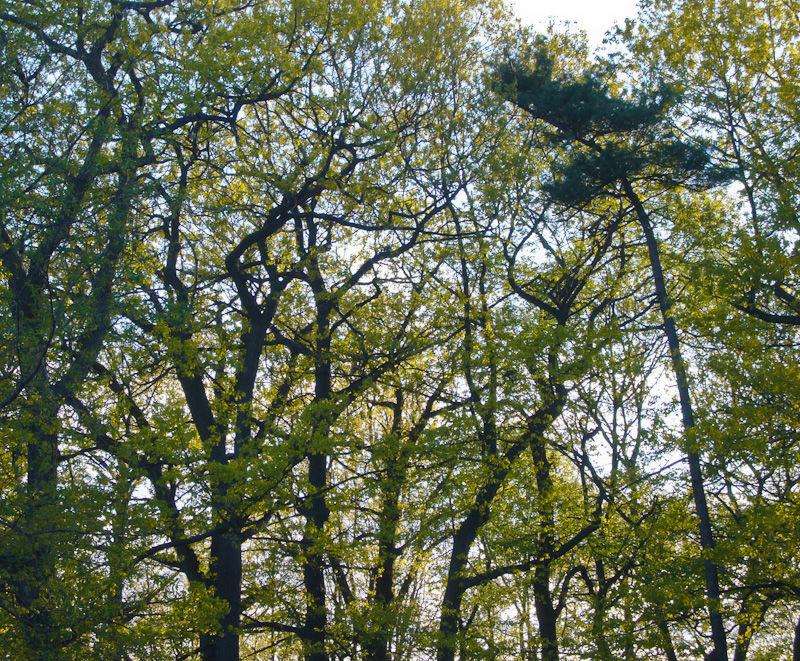 """High Park"" Toronto Spring trees"