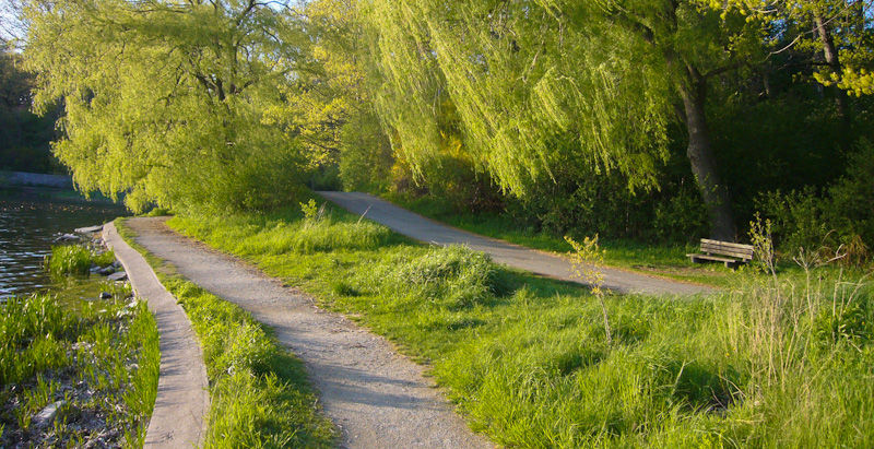 """High Park"" Toronto Spring ""Grenadier Pond"" willow"