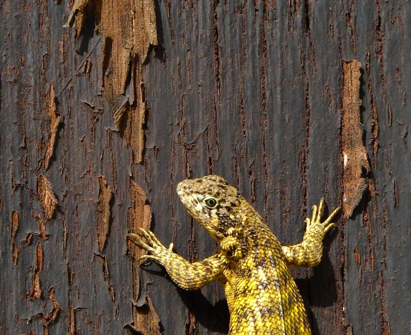 "Remedios Cuba church ""new church"" lizard door"