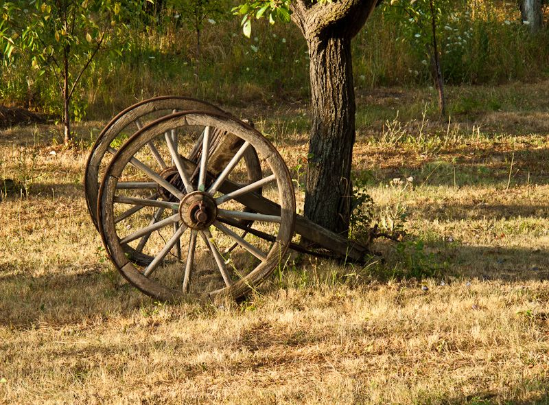 Summer, wheels, tree, rural,