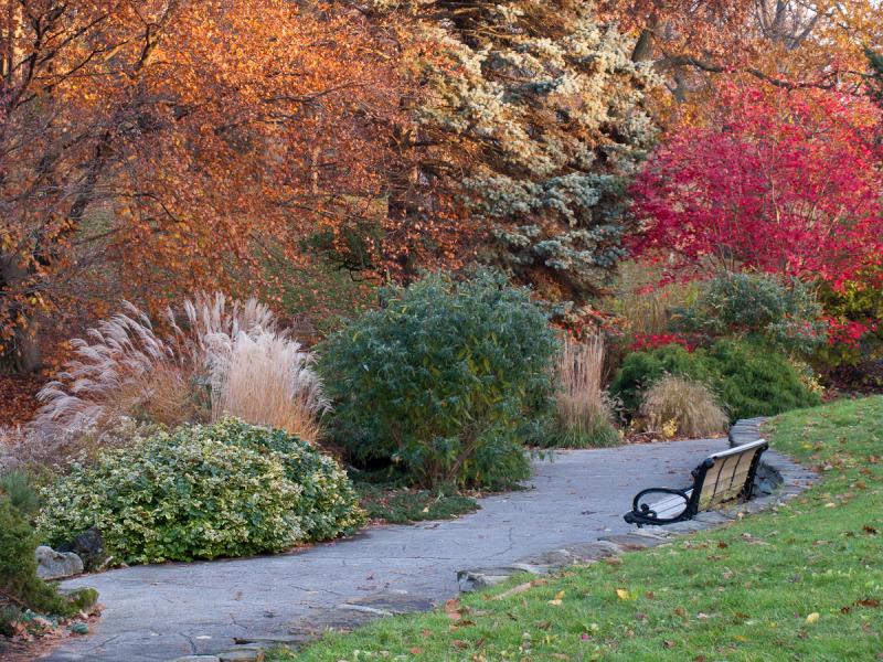 """Toronto """"High Park"""" Autumn Fall colors colurs benc"""