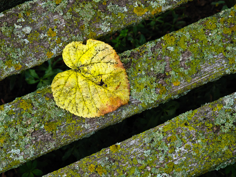 Fall Autumn colors moss leaf yellow bench