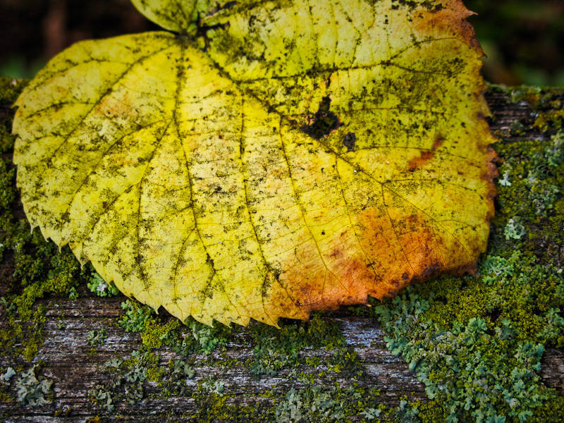 Fall Autumn colors moss leaf yellow bench closeup