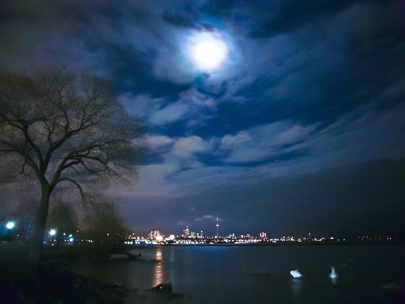 Toronto lake moon night swans tree blue skyline