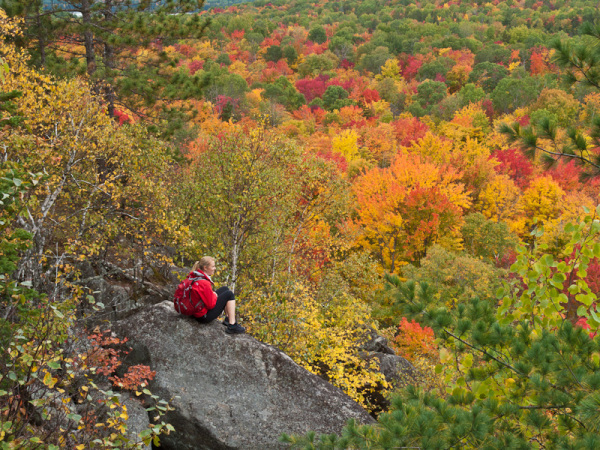 Algonquin Fall Ontario Autumn red leaves colour