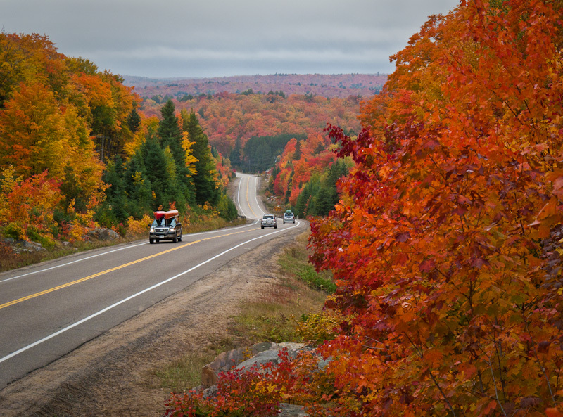 Algonquin Fall Ontario road Nature red Hwy 60