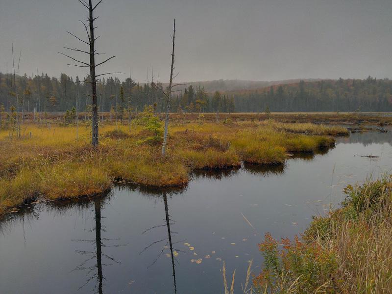 Algonquin Autumn Fall Ontario rain clouds forest