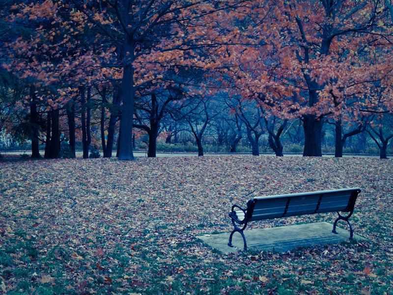 High Park Toronto bench Autumn Fall oak leaves