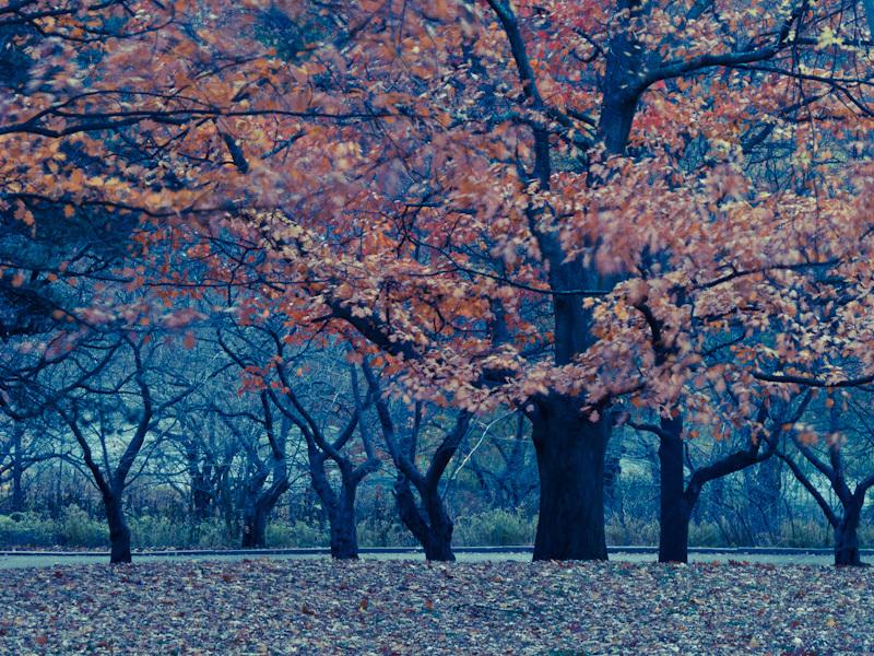 High Park Toronto colors Autumn Fall oak leaves
