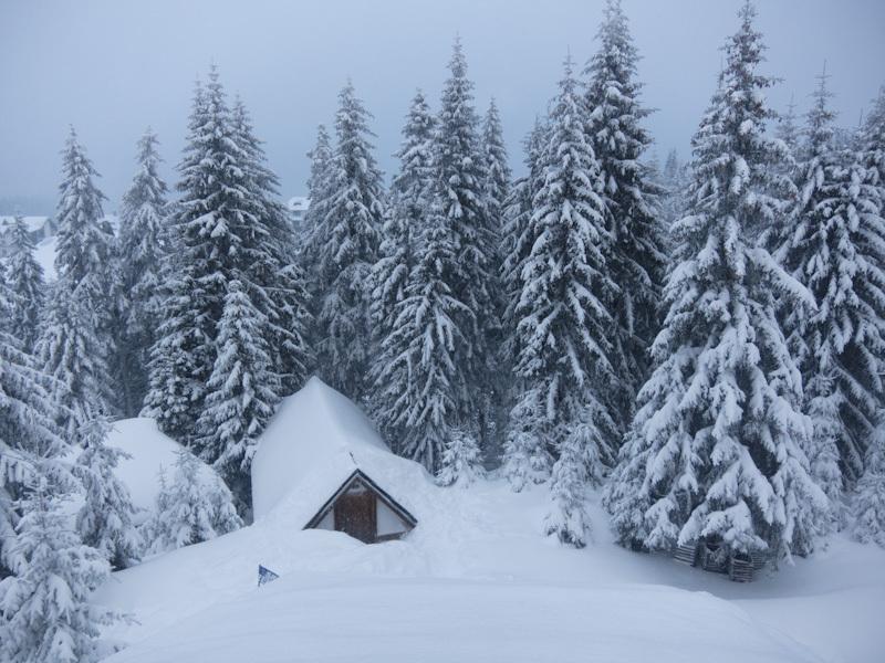 Winter Kopaonik Serbia mountain morning trees