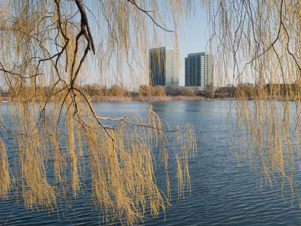 High Park Toronto Spring Grenadier Pond willow