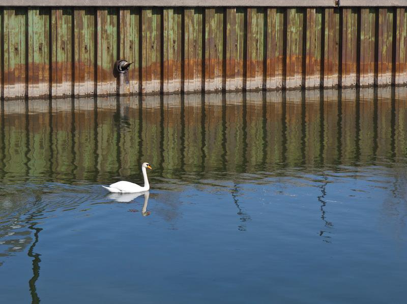 Don River Toronto swan urban calm, reflection