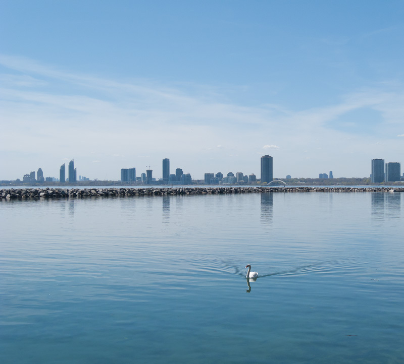 """Marylin Bell Park"" Toronto lake Ontario swan"