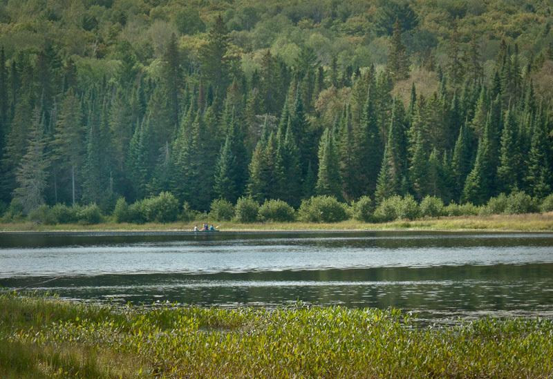 Algonquin Ontario canoe lake Summer forest