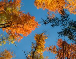 Algonquin Park Ontario Autumn Fall Colors leaves