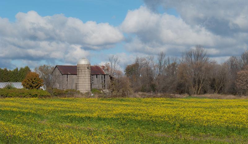 Autumn Fall Ontario farm barn clouds yellow field