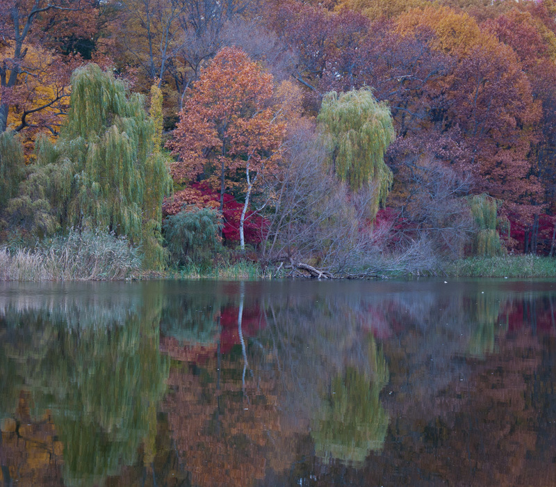 Autumn Fall High Park Toronto colours leaves red