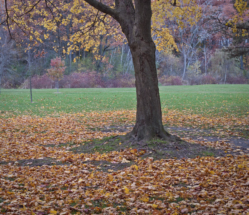 Autumn Fall High Park Toronto colours yellow red