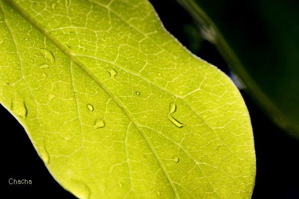 Flashy plant