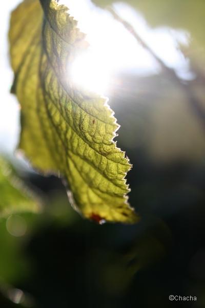 The morning light (3)
