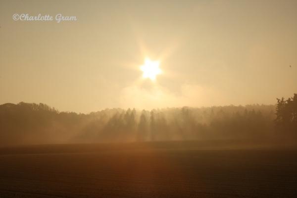 The morning light (6)