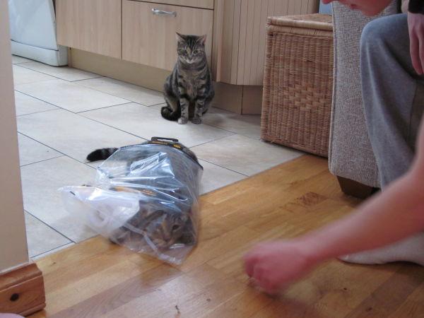 Mikey & Calvin playing bag #2
