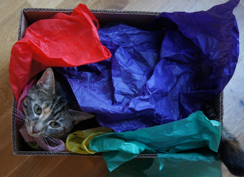 cat, paper