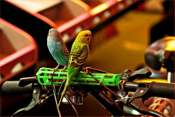 birds on bike