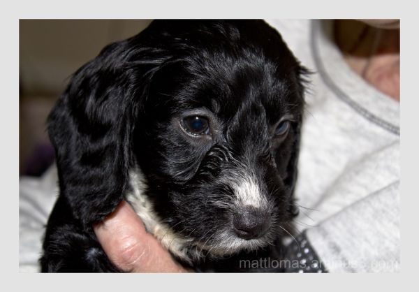 Poppy the puppy who arrived home yesterday, shot 2