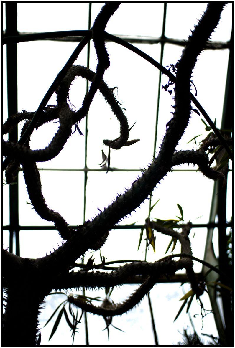 Cactus, Lyon