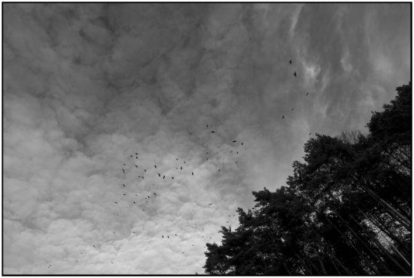 Birds, Burgandy