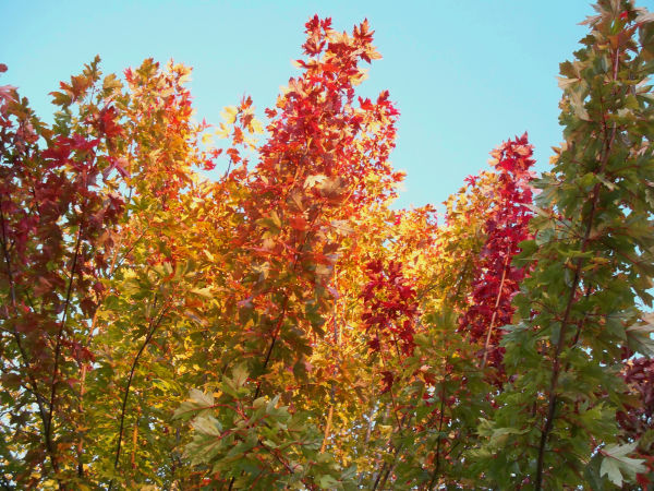 Contrasting Autumn Colors