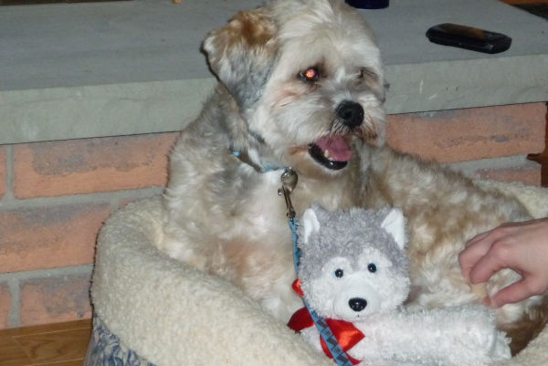 Harley playing with his new teddy bear!