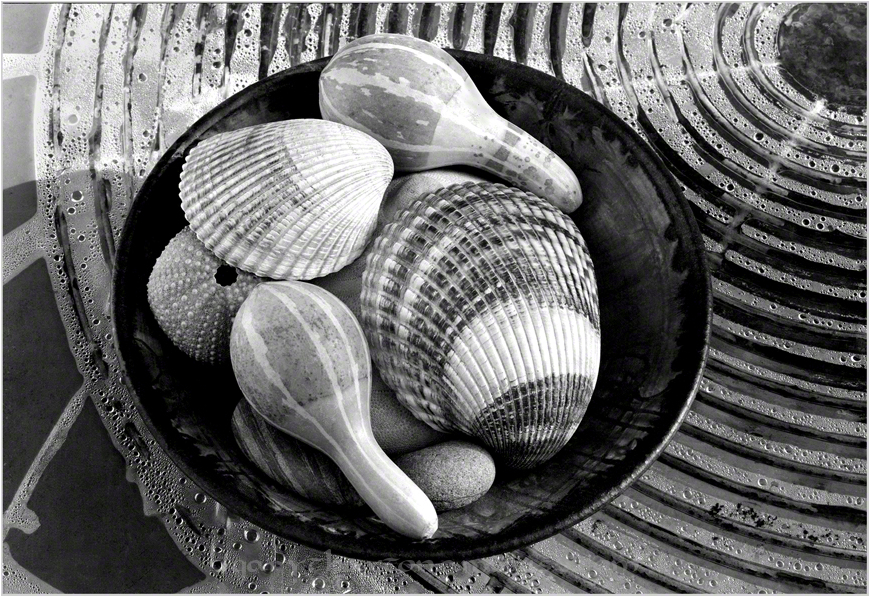 Shells and Other Menageries