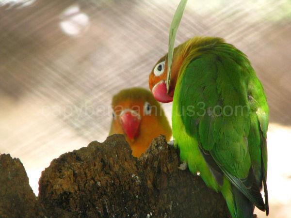 Parakeets at the Zoo