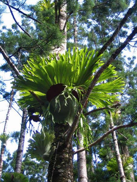 Trees on Fraser