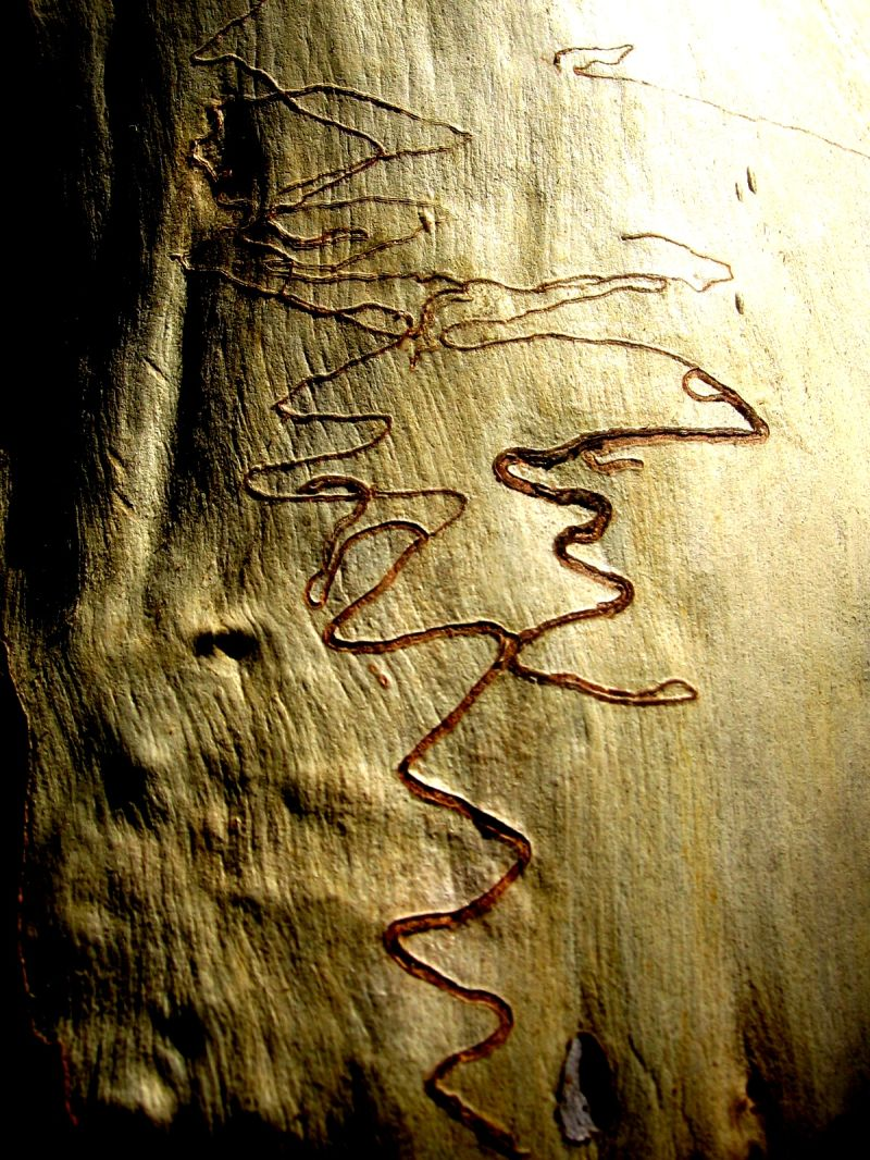veins of a tree in the Blue Mountains