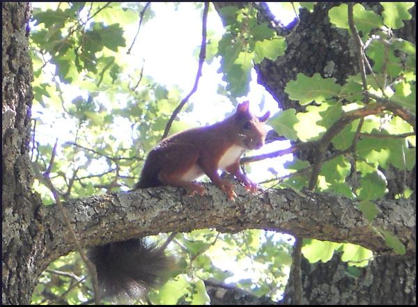 Ecureuil pas farouche