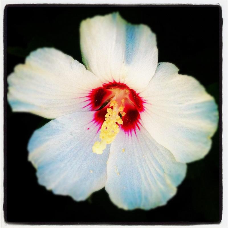 fleur des rues