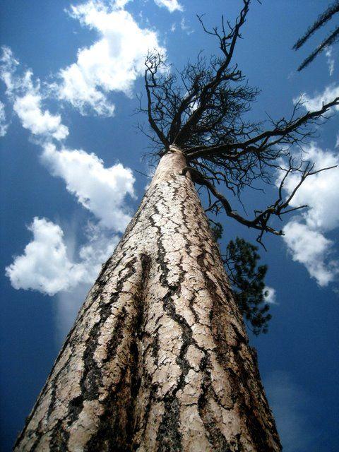 tree pointing skyward