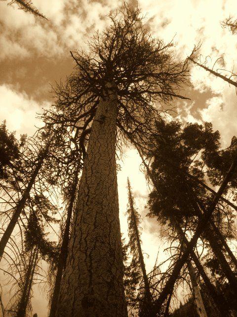 a tree scape