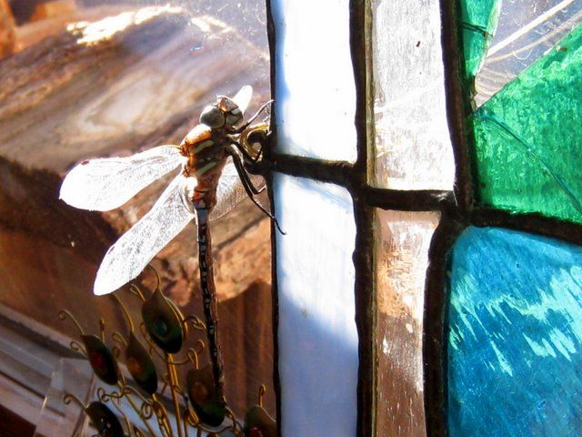 dragonfly on stained glass