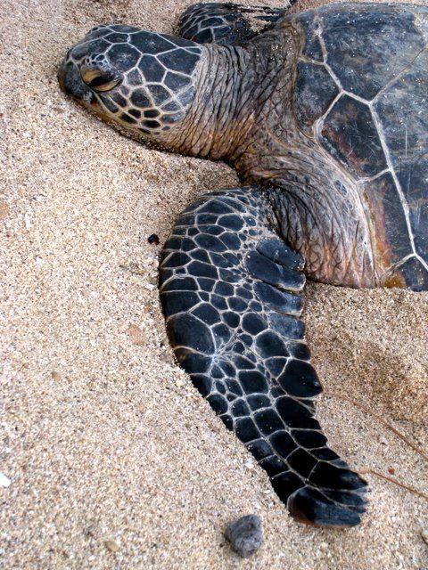 sea turtle ashore