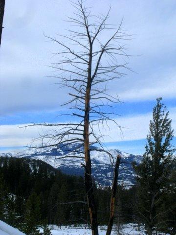 tree w/ sky