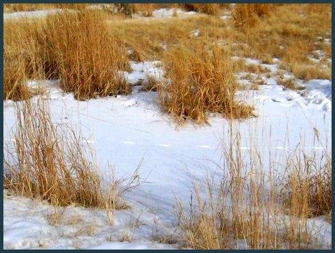 snow n grass